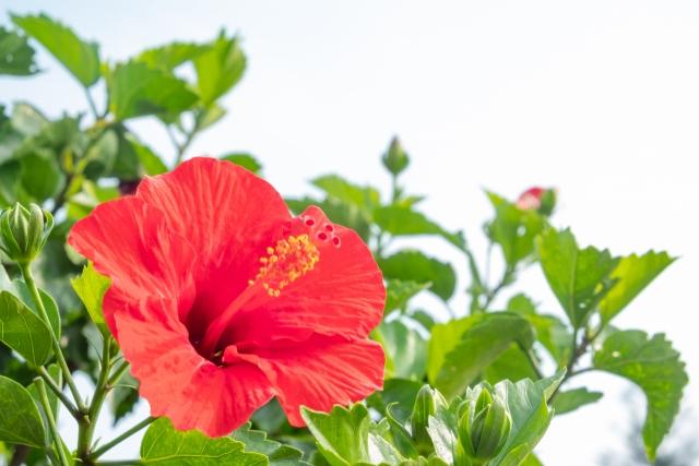 沖縄県で家庭教師をお探しのご家庭へ お子さんの成績を短期間で上げます!